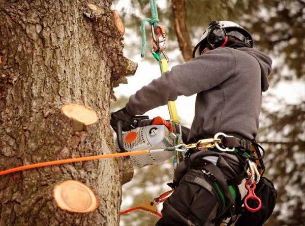 tree trimming porirua